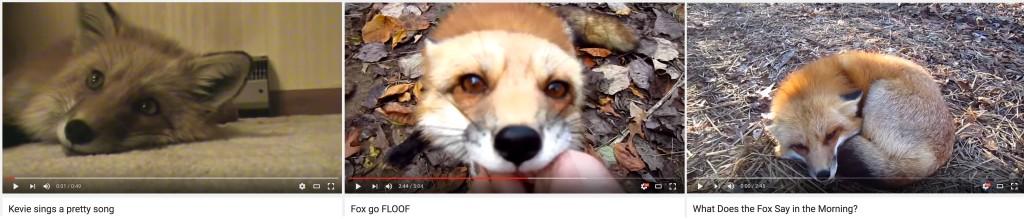 fox mus